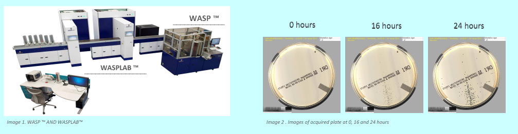 WASP Urine Eval Pic 1.PNG
